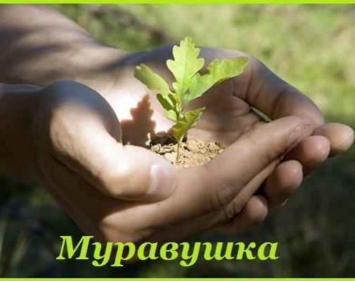МКДОУ №209 города Кирова